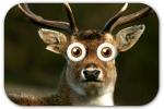 deer-in-headlights-1